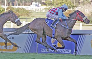 Smart Banker leads Laird's trio home345 in Chestnut