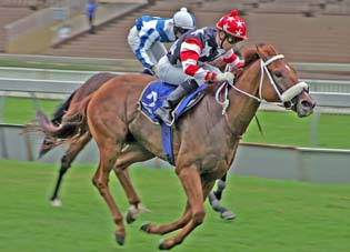 Thandolwami can join the equine millionaire club