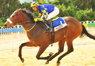 Galileo's Galaxy on course  to contest G1 Cape Guineas